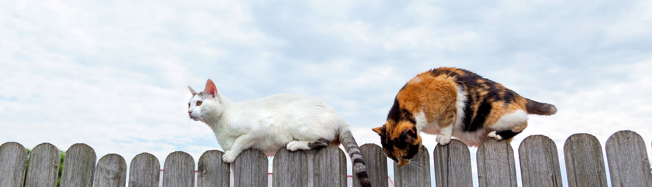 Two stray cats walking along a fence on a sunny day.