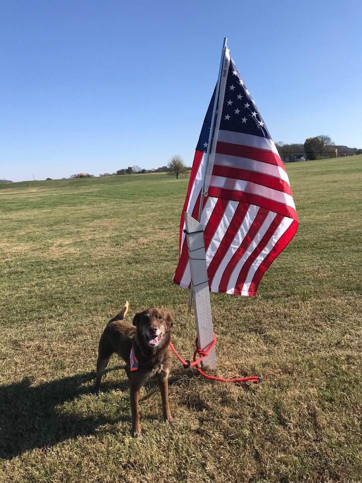 A large dog standing next to an American flag in a park