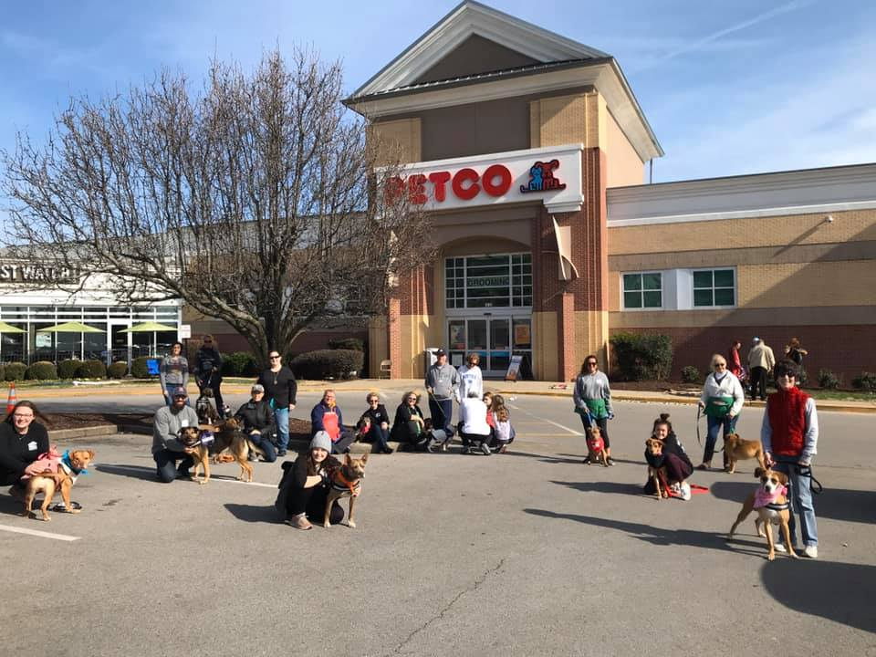 Shelter dogs and volunteers in the Petco parking lot